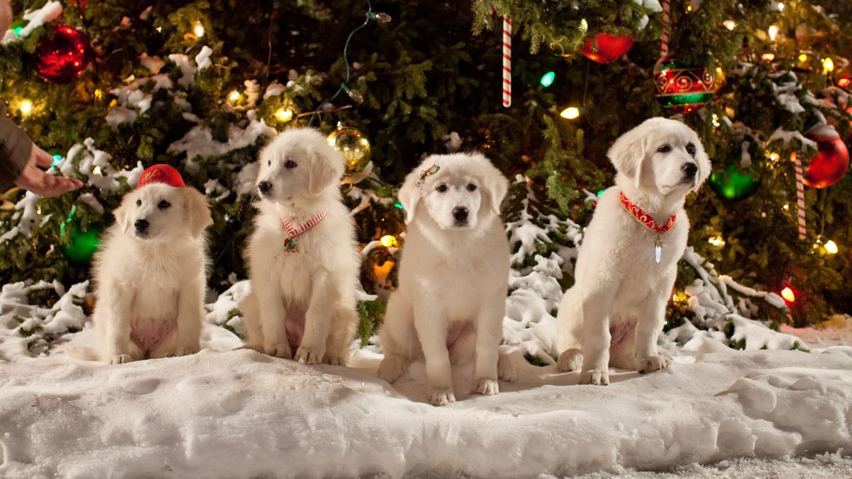 Karácsonyi kutyabalhé 2. - A kölykök