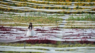A világ leghosszabb esküvői ruhája