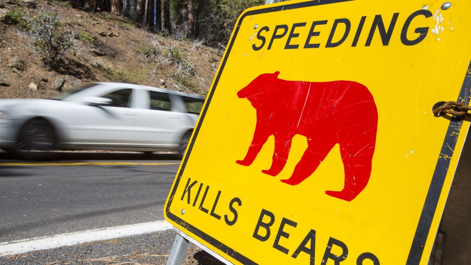 Ők azok, akik az utcákról, a főutakról, az autópályákról, a felüljárókról, a hidakról eltakarítják az elhullott állatok tetemeit, amelyek odatévedve sokszor baleset áldozatai lesznek. Munkájuk már azért is kulcsfontosságú, mert így megelőzhetőek a további balesetek is. (Global Warming Images /Shutterstock)