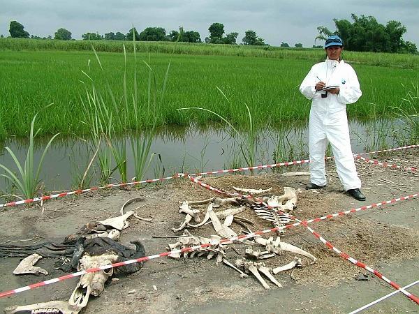 Belegondoltál már abba, honnan tudják a csapattagok, hogy mikor is halt meg az áldozat? Bármilyen hihetetlenül - vagy undorítóan - is hangzik, léteznek olyan farmok, ahol mindenféle körülmények közt tartanak emberi testeket, hogy az oszlást vizsgálják és dokumentálják. Pfúj!