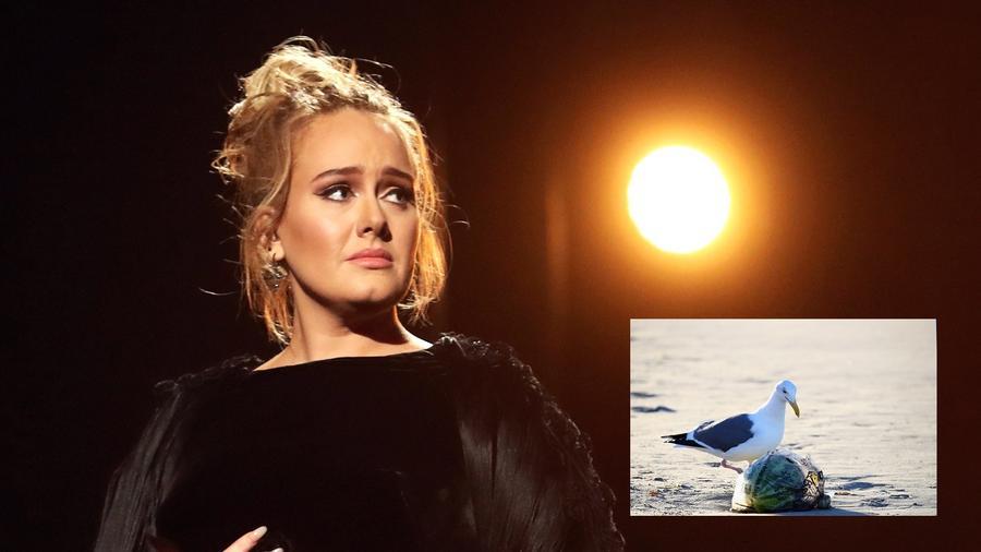 """Adele-t a sirályok tudják kikergetni a világból. A félelmének története is van. """"9 éves koromban kezdődött az egész, amikor a mólón sétáltam Tenby-ban, és jégkrémet ettem. Egyszer csak megjelent rohadt nagy sirály, lecsapott, és kimarta a kezemből...azt hittem, engem is fel fog kapni!"""" (Getty Images)"""
